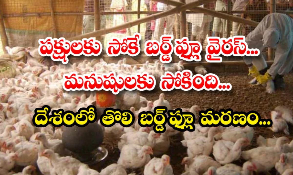 First Bird Flu Death India Aiims Delhi-పక్షులకు సోకే బర్డ్ ఫ్లూవైరస్.. మనుషులకు సోకింది.. దేశంలో తొలి బర్డ్ ఫ్లూ మరణం-General-Telugu-Telugu Tollywood Photo Image-TeluguStop.com
