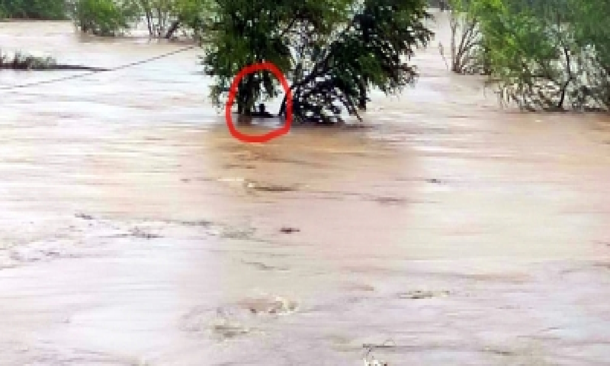 16 Up Districts On Flood Alert As Rivers Swell-TeluguStop.com