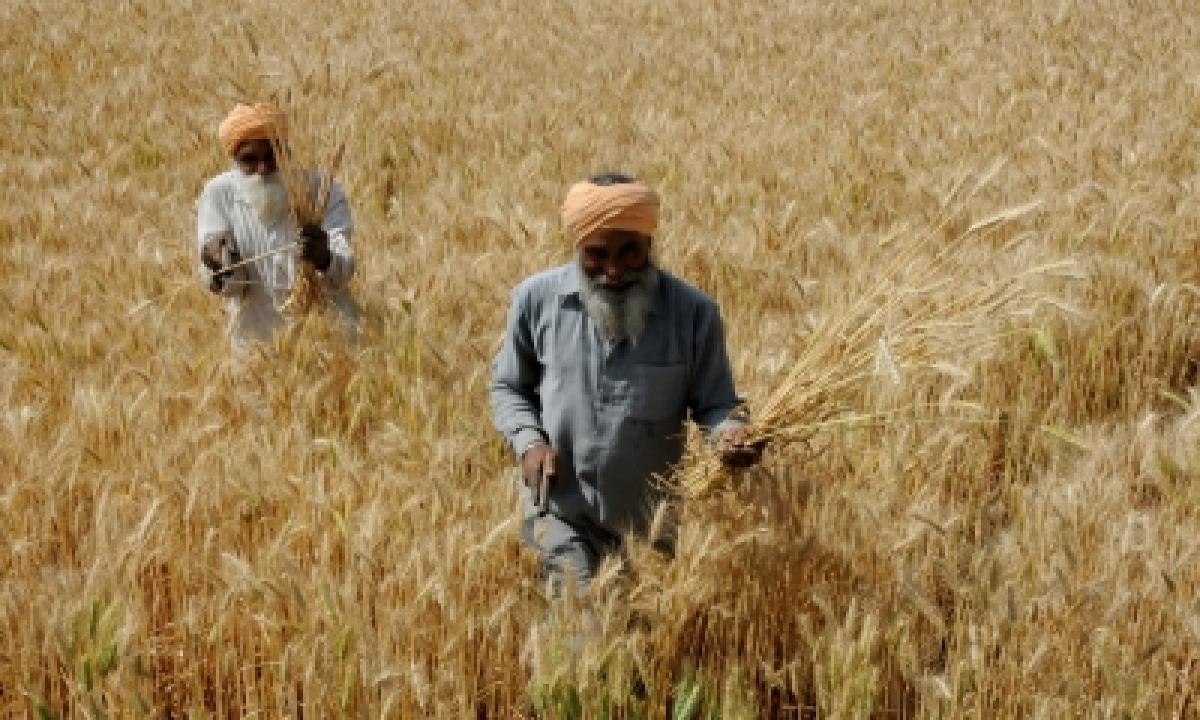65% More Wheat Procured In Rabi Season Than Last Year-TeluguStop.com