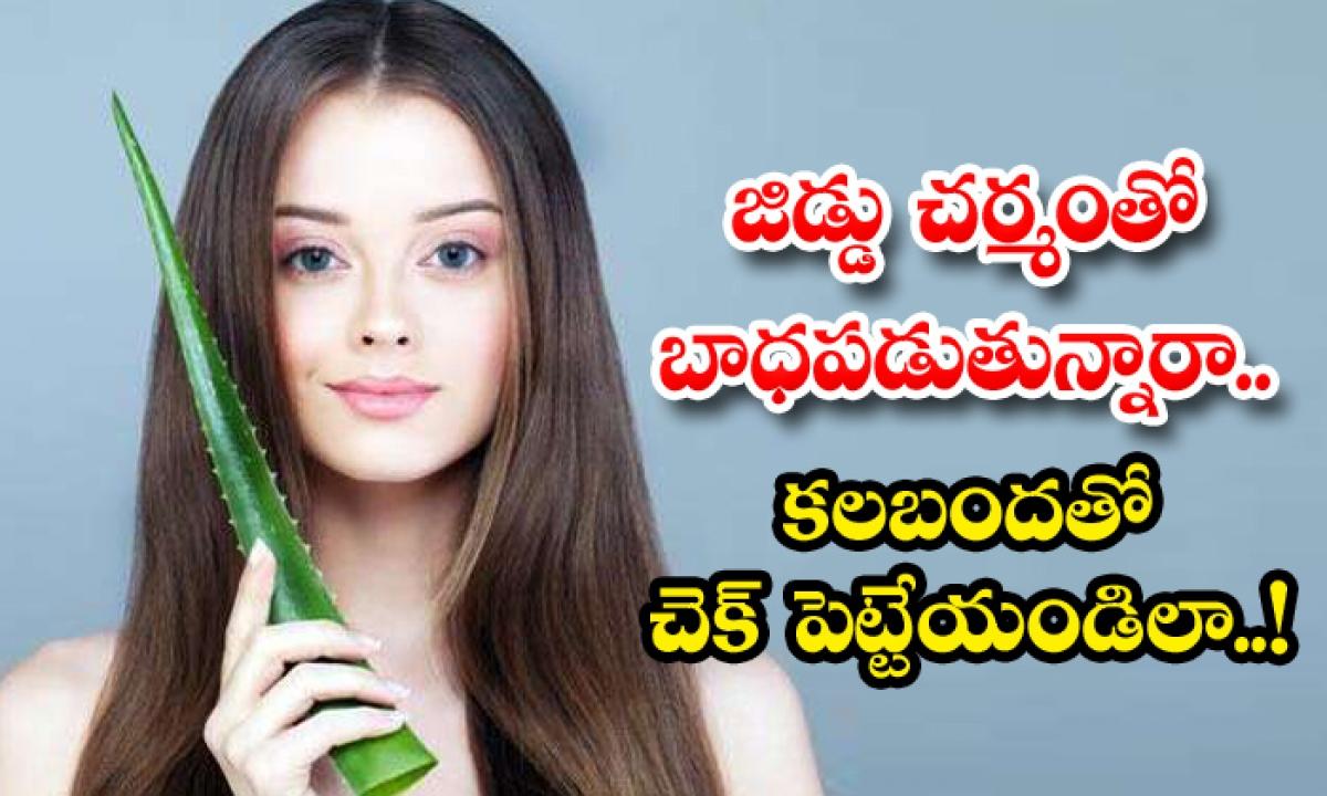 Aloe Vera Helps To Get Rid Of Oily Skin-జిడ్డు చర్మంతో బాధపడుతున్నారా.. కలబందతో చెక్ పెట్టేయండిలా-Latest News - Telugu-Telugu Tollywood Photo Image-TeluguStop.com