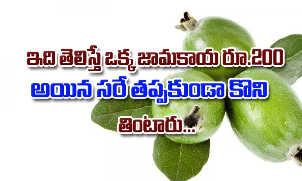 Amazing Health Benefits Of Guava Fruit In Telugu-ఇది తెలిస్తే ఒక్క జామకాయ రూ.200 అయిన సరే తప్పకుండా కొని తింటారు-Telugu Health - తెలుగు హెల్త్ టిప్స్ ,చిట్కాలు-Telugu Tollywood Photo Image-TeluguStop.com