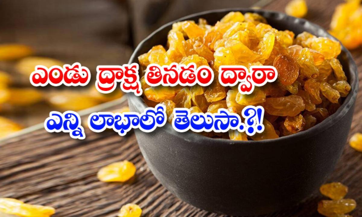 Health Benefits Of Dry Grapes Immunity Power-ఎండు ద్రాక్ష తినడం ద్వారా ఎన్ని లాభాలో తెలుసా ..-Latest News - Telugu-Telugu Tollywood Photo Image-TeluguStop.com