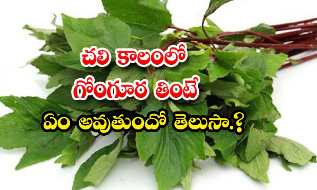 Health Benefits Of Gongura In Winter Season-TeluguStop.com