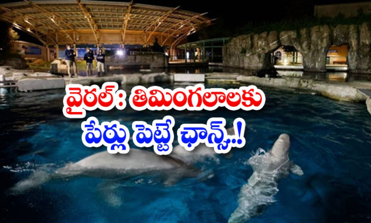 Viral Chance Of Naming Whales-వైరల్: తిమింగలాలకు పేర్లు పెట్టే ఛాన్స్..-General-Telugu-Telugu Tollywood Photo Image-TeluguStop.com