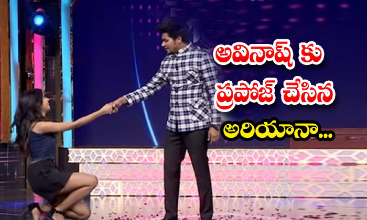 Bigg Boss Fame Ariyana Make Love Proposal To Avinash-TeluguStop.com