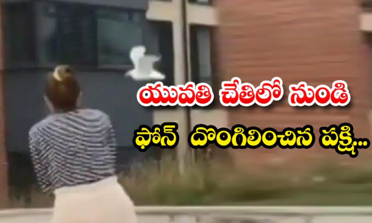 Viral Bird Stolen Woman Mobile Phone-TeluguStop.com
