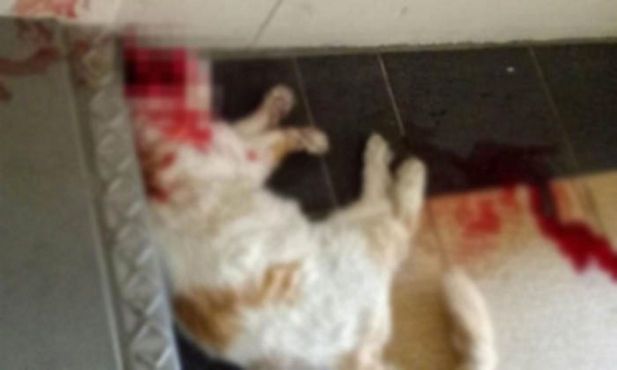 Cat Animal Raped Minor Boy Pakistan-ఏందయ్యా ఈ దారుణం : పిల్లి ని దారుణంగా అత్యాచారం చేసి హత్య…-Latest News - Telugu-Telugu Tollywood Photo Image-TeluguStop.com