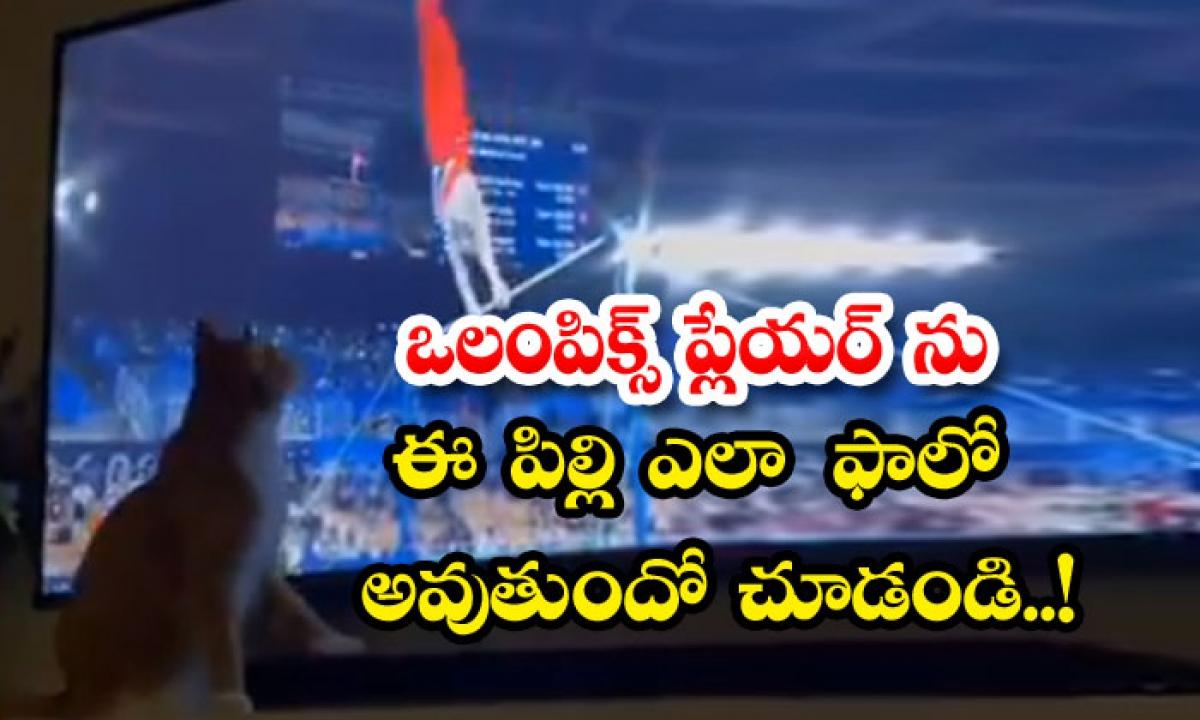 See How Thcat Follows The Olympics Player-ఒలంపిక్స్ ప్లేయర్ను ఈ పిల్లి ఎలా ఫాలో అవుతుందో చూడండి..-General-Telugu-Telugu Tollywood Photo Image-TeluguStop.com