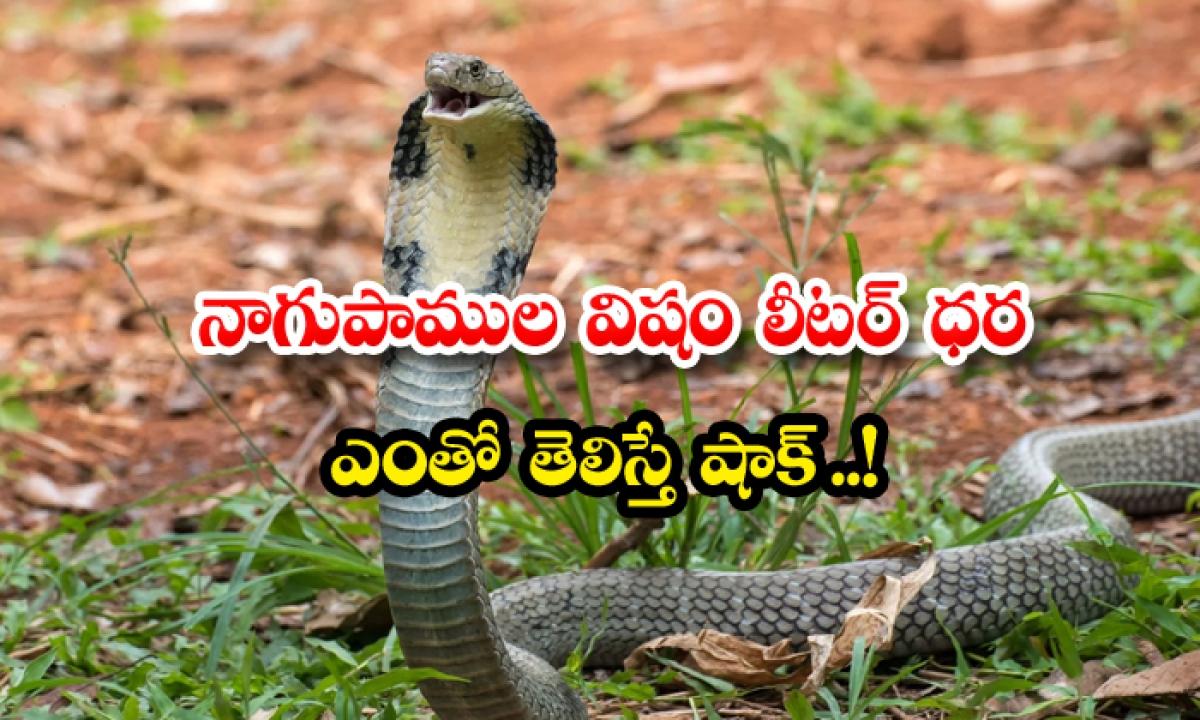 Cobra Venom Is Very Shocking To Know The Price Of A Liter-నాగుపాముల విషం లీటర్ ధర ఎంతో తెలిస్తే షాక్…-General-Telugu-Telugu Tollywood Photo Image-TeluguStop.com
