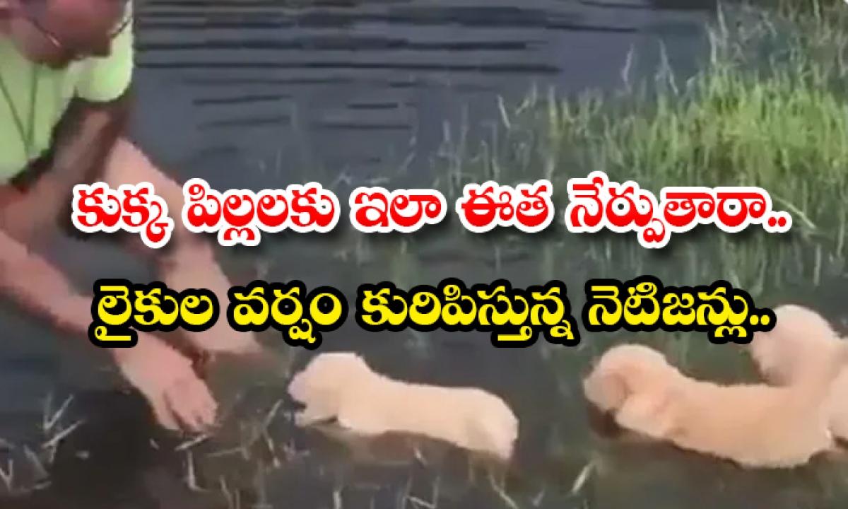 Do You Teach Puppies To Swim Like This Netizens Likes-కుక్క పిల్లలకు ఇలా ఈత నేర్పుతారా.. లైకుల వర్షం కురిపిస్తున్న నెటిజన్లు..-General-Telugu-Telugu Tollywood Photo Image-TeluguStop.com