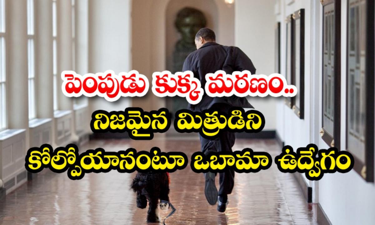 Ex Us President Barack Obamas Family Dog Bo A Star Of The White House Dies-పెంపుడు కుక్క మరణం.. నిజమైన మిత్రుడిని కోల్పోయానంటూ ఒబామా ఉద్వేగం-Latest News - Telugu-Telugu Tollywood Photo Image-TeluguStop.com