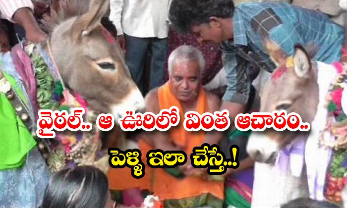Farmers Perform Wedding Of Donkeys-వైరల్.. ఆ ఊరిలో వింత ఆచారం..పెళ్ళి ఇలా చేస్తే..-General-Telugu-Telugu Tollywood Photo Image-TeluguStop.com