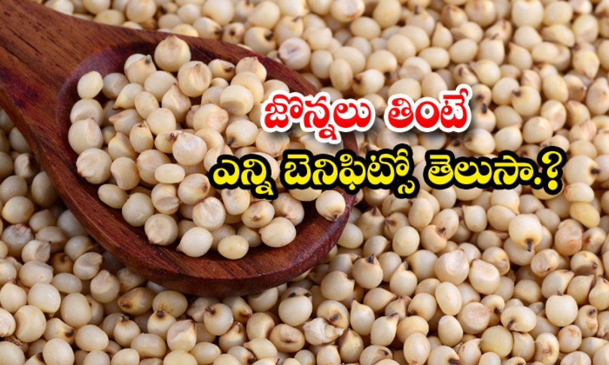 What Are The Health Benefits Of Sorghum-TeluguStop.com