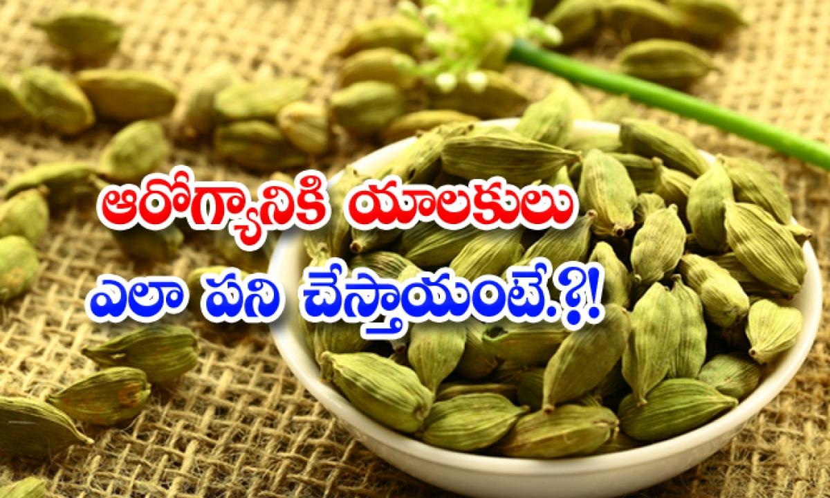 Health Benefits Of Eating Elachi Seeds Hot Water-ఆరోగ్యానికి యాలకులు ఎలా పనిచేస్తాయంటే…-General-Telugu-Telugu Tollywood Photo Image-TeluguStop.com