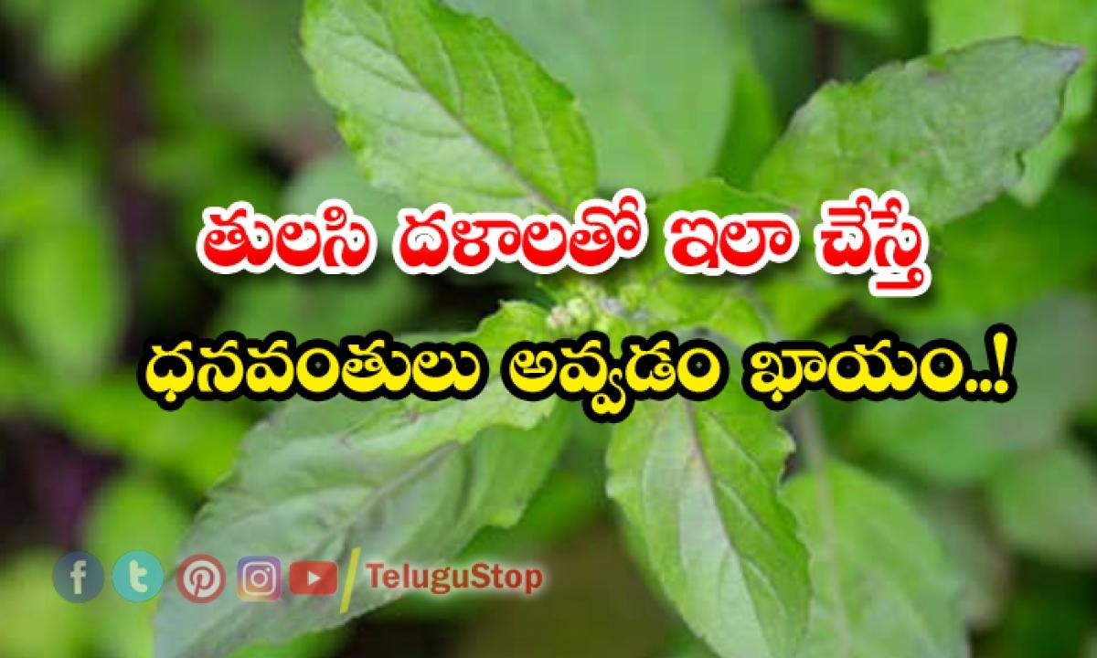 Thulasi Pooja Will Make Rich People-తులసి దళాలతో ఇలా చేస్తే ధనవంతులు అవ్వడం ఖాయం-Latest News - Telugu-Telugu Tollywood Photo Image-TeluguStop.com