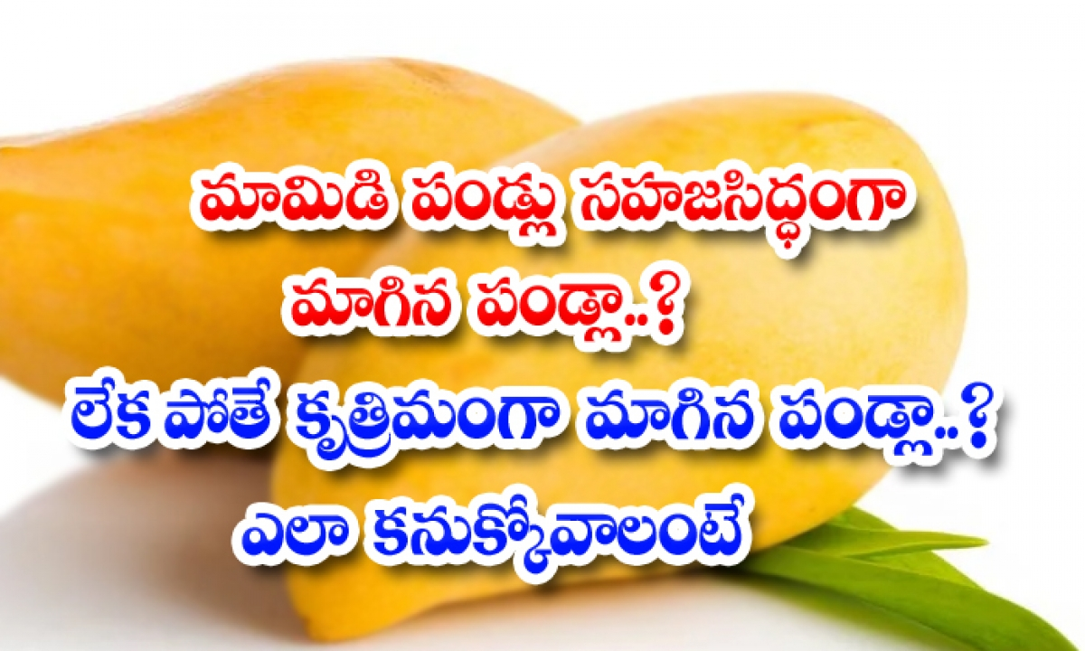Are Mangoes Naturally Ripe Otherwise Artificially Ripe Fruit How To Find Out-TeluguStop.com