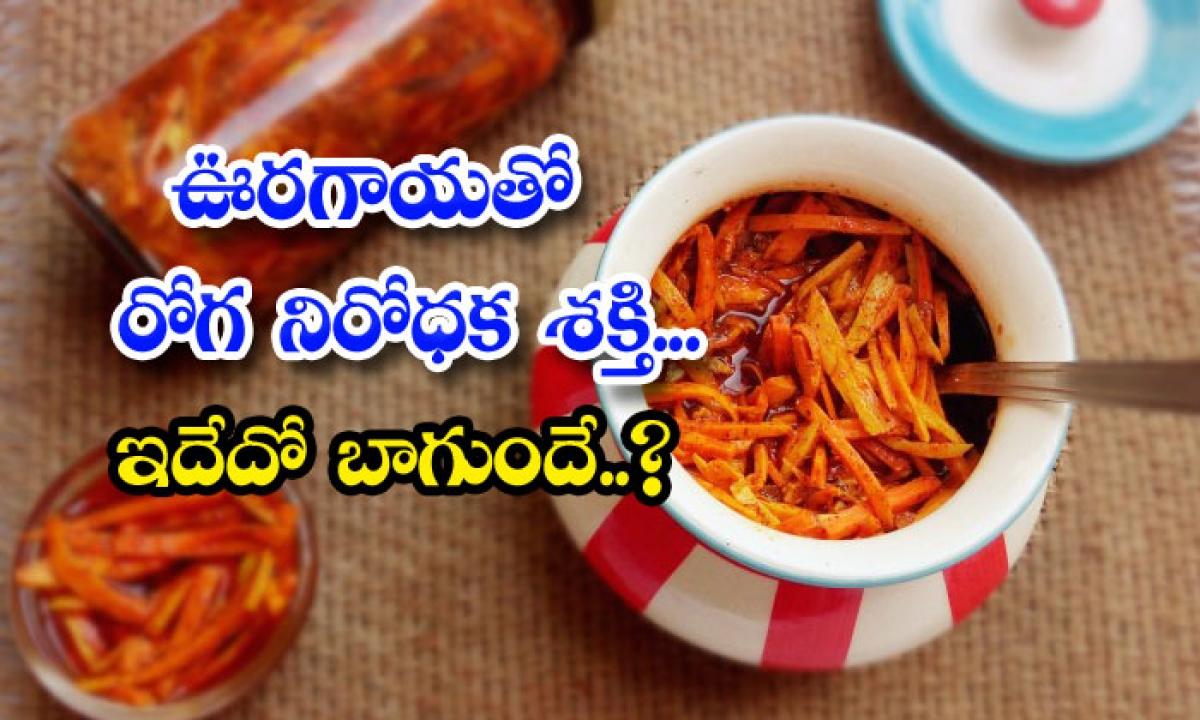 Immunity Power Pickle-ఊరగాయతో రోగనిరోధక శక్తి.. ఇదేదో బాగుందే..-Telugu Health - తెలుగు హెల్త్ టిప్స్ ,చిట్కాలు-Telugu Tollywood Photo Image-TeluguStop.com