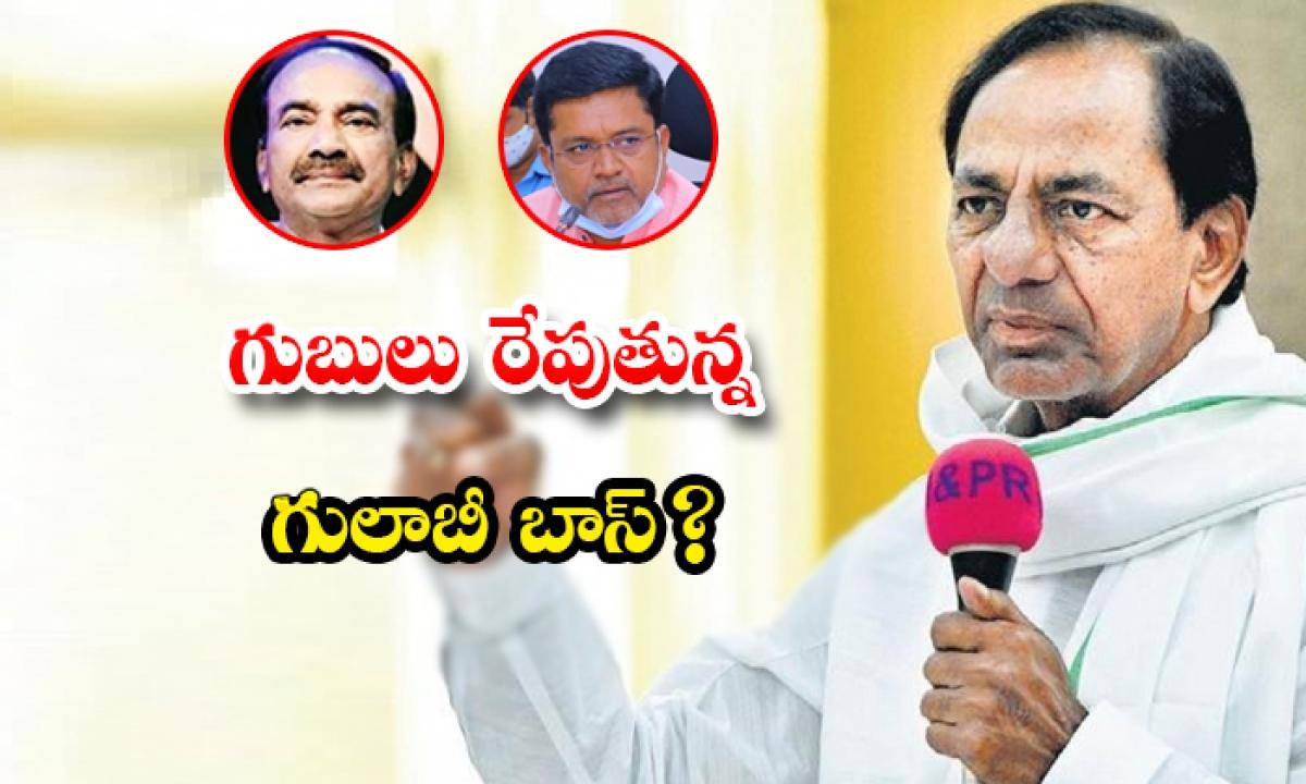 Kcr Looking To Purge Trs-గుబులు రేపుతున్న గులాబీ బాస్ -Political-Telugu Tollywood Photo Image-TeluguStop.com