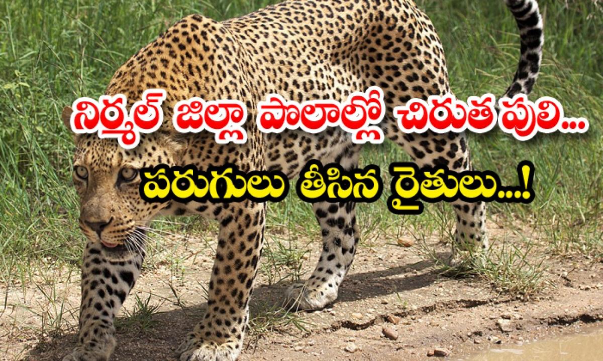 Nirmal District Leopard Roaming Public Panic-నిర్మల్ జిల్లా పొలాల్లో చిరుతపులి.. పరుగులు తీసిన రైతులు..-General-Telugu-Telugu Tollywood Photo Image-TeluguStop.com