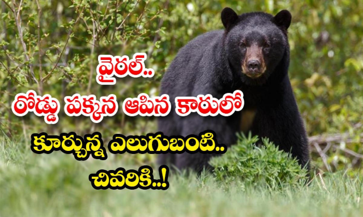 Man Risks Life As He Tries To Scare Away Bear That Broke Into His Car-వైరల్.. రోడ్డు పక్కన ఆపిన కారులో కూర్చున్న ఎలుగుబంటి.. చివరికి..-General-Telugu-Telugu Tollywood Photo Image-TeluguStop.com