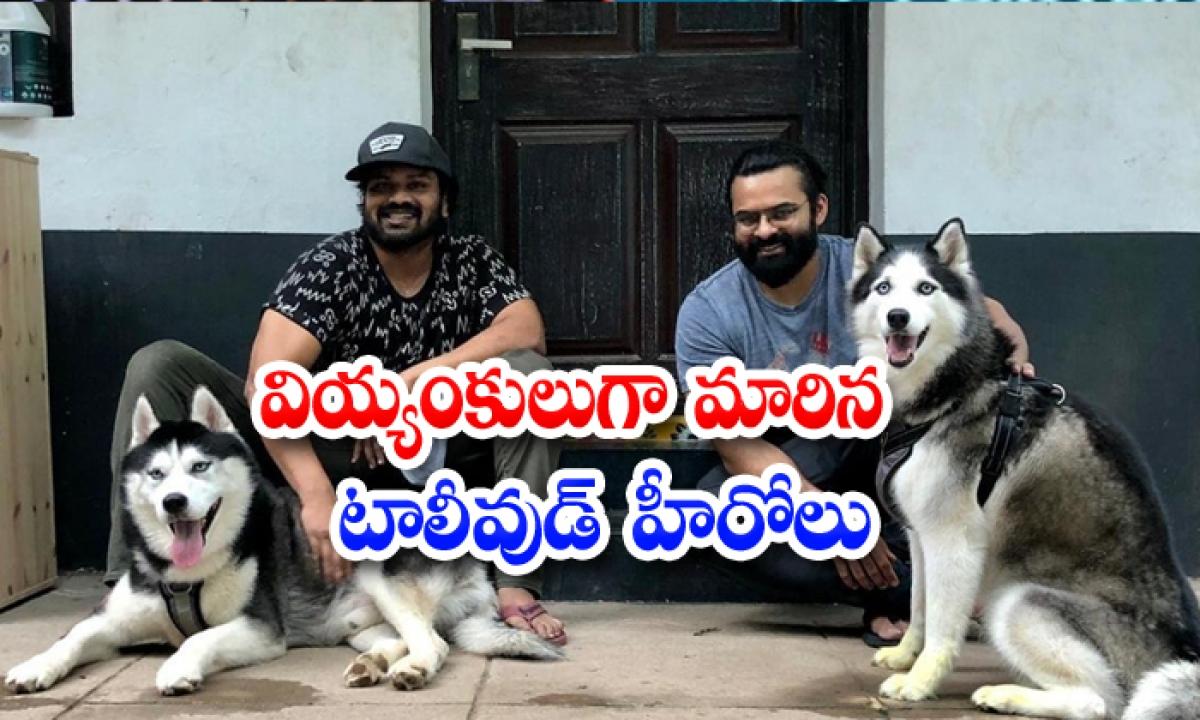 Manchu Manoj Sai Dharam Tej Pet Dogs-వియ్యంకులుగా మారిన టాలీవుడ్ హీరోలు-General-Telugu-Telugu Tollywood Photo Image-TeluguStop.com