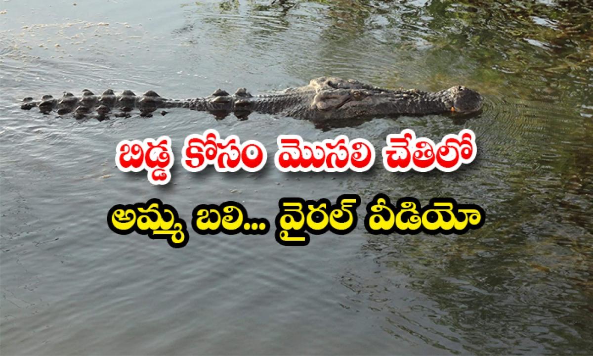 Mother Killed By Crocodile For Baby Viral Video-బిడ్డ కోసం మొసలి చేతిలో అమ్మ బలి… వైరల్ వీడియో-General-Telugu-Telugu Tollywood Photo Image-TeluguStop.com