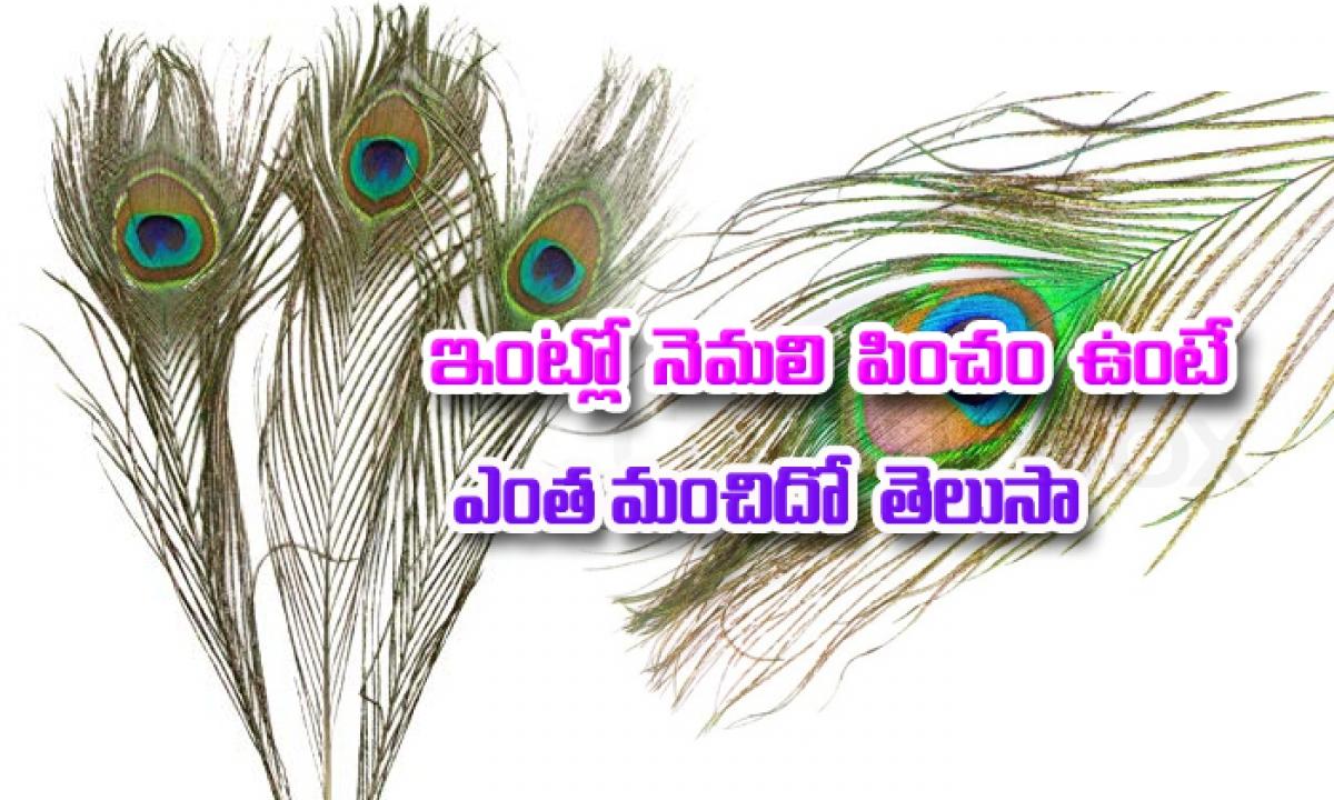 Positive Effects Of Keeping Peacock Feathers At Home-ఇంట్లో నెమలి పించం ఉంటే ఎంత మంచిదో తెలుసా.. తప్పక తెలుసుకోవాల్సిన విషయం-Telugu Bhakthi-Telugu Tollywood Photo Image-TeluguStop.com