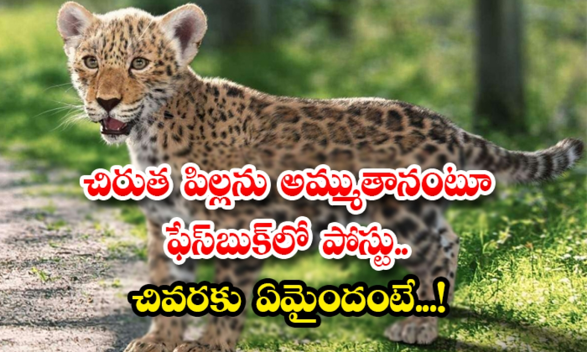Posted On Facebook As If Selling A Leopard Cub What Is The End-చిరుత పిల్లను అమ్ముతానంటూ ఫేస్బుక్లో పోస్టు.. చివరకు ఏమైందంటే…-General-Telugu-Telugu Tollywood Photo Image-TeluguStop.com