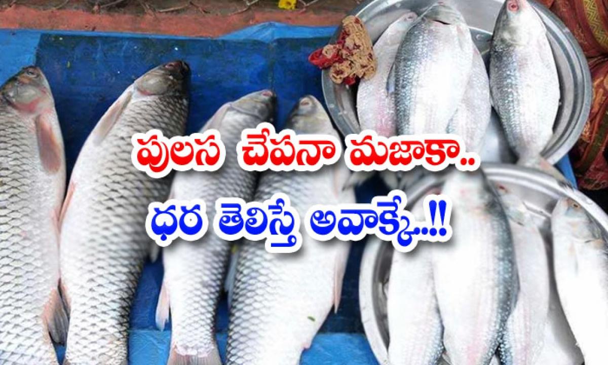 Pulasa Fish Na Majaka For Reprint Rights-పులస చేపనా మజాకా.. ధర తెలిస్తే అవాక్కే..-General-Telugu-Telugu Tollywood Photo Image-TeluguStop.com