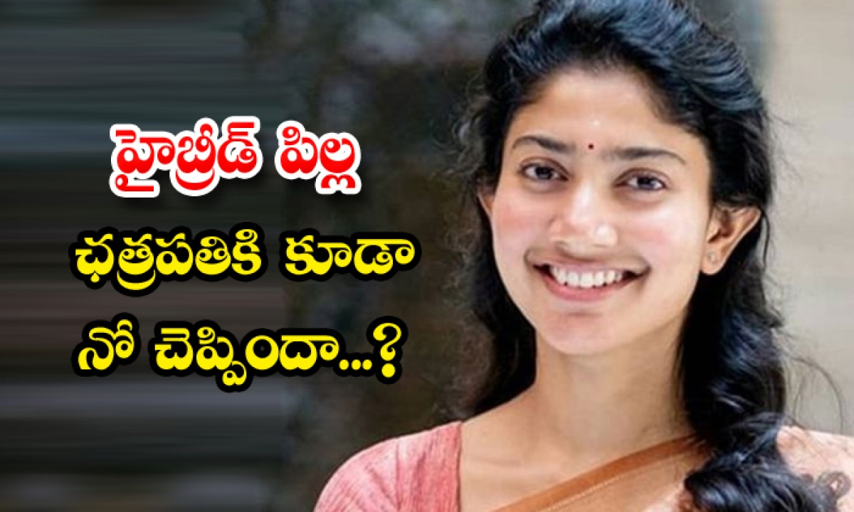 Sai Pallavi Dont Want To Act In Bellamkonda Movie Chatrapathi-హైబ్రీడ్ పిల్ల ఛత్రపతికి కూడా నో చెప్పిందా-Latest News - Telugu-Telugu Tollywood Photo Image-TeluguStop.com
