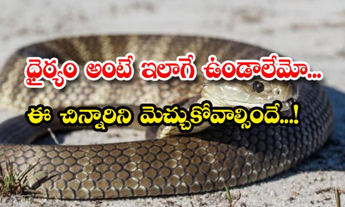 Snake Bite Boy Chased And Killed The Bitten Snake-ధైర్యం అంటే ఇలాగే ఉండాలేమో.. ఈ చిన్నారిని మెచ్చుకోవాల్సిందే..-General-Telugu-Telugu Tollywood Photo Image-TeluguStop.com