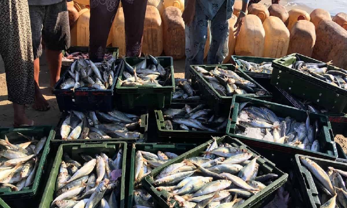 Telangana Soon Becomes An Exporter Of Fish, Says State Planning Commission-Latest News - Telugu-Telugu Tollywood Photo Image-TeluguStop.com