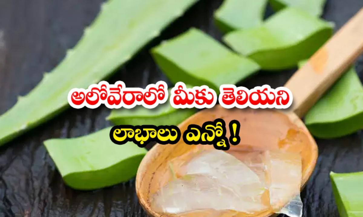 The Unknown Benefits Of Aloevera-అలోవేరాలో మీకు తెలియని లాభాలు ఎన్నో-General-Telugu-Telugu Tollywood Photo Image-TeluguStop.com