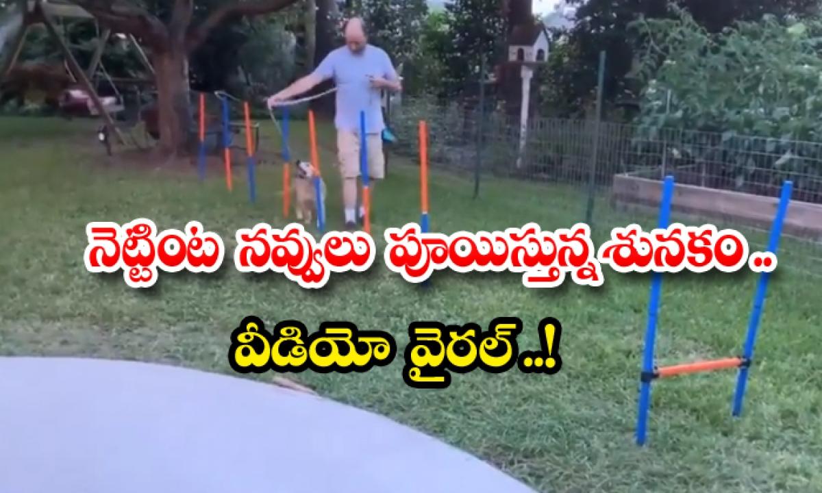 This Dog Video Perfectly Reflects Our Monday Mood-నెట్టింట నవ్వులు పూయిస్తున్న శునకం.. వీడియో వైరల్ -General-Telugu-Telugu Tollywood Photo Image-TeluguStop.com
