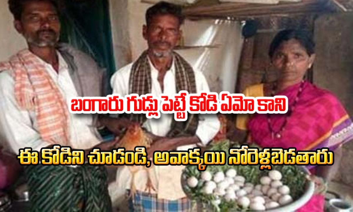 This Hen Gets Guinness Book Of World Record-TeluguStop.com