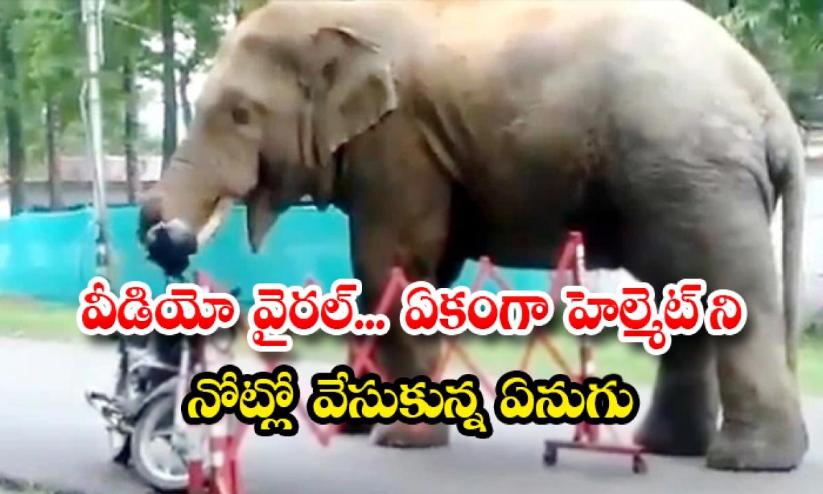 Video Goes Viral An Elephant Wearing A Helmet On His-TeluguStop.com