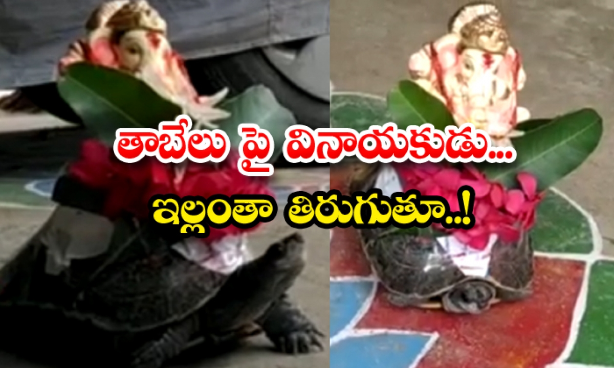Animal Lover From Yadadri Erected Vinayaka Statue On Turtle-తాబేలు'పై వినాయకుడు.. ఇల్లంతా తిరుగుతూ..-General-Telugu-Telugu Tollywood Photo Image-TeluguStop.com