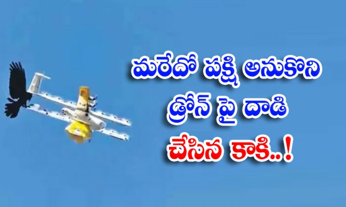 Viral Latest Viral News Social Media Viral Photos Drone Bird Attack-వైరల్ పిక్: మరేదో పక్షి అనుకొని డ్రోన్ పై దాడి చేసిన కాకి..-General-Telugu-Telugu Tollywood Photo Image-TeluguStop.com