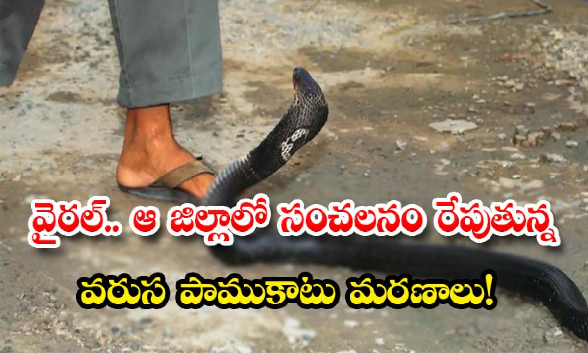 Viral Snakebite Deaths Causing A Stir In That District-వైరల్.. ఆ జిల్లాలో సంచలనం రేపుతున్న వరుస పాముకాటు మరణాలు-General-Telugu-Telugu Tollywood Photo Image-TeluguStop.com