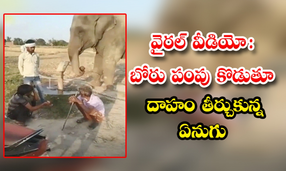 Viral Video A Thirsty Elephant Pumping A Bore For Drinking Water-TeluguStop.com