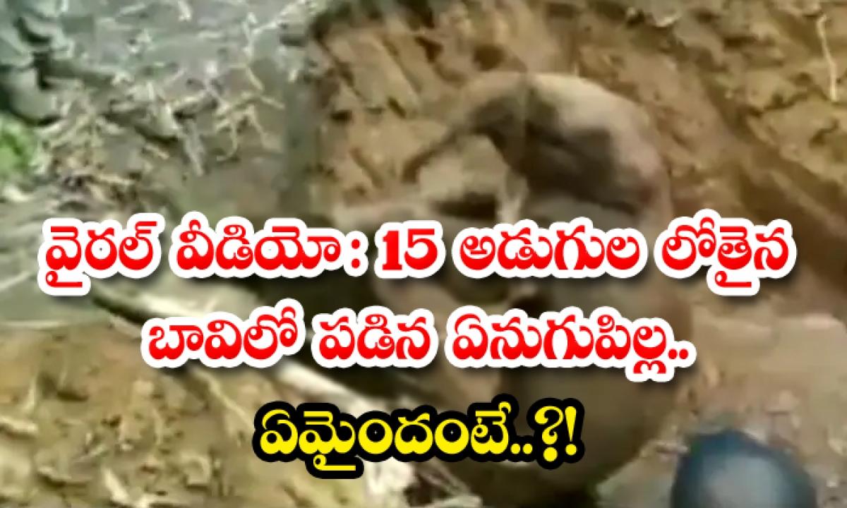 Viral Video An Elephant Calf That Fell Into A 15 Feet Deep Well Because-TeluguStop.com