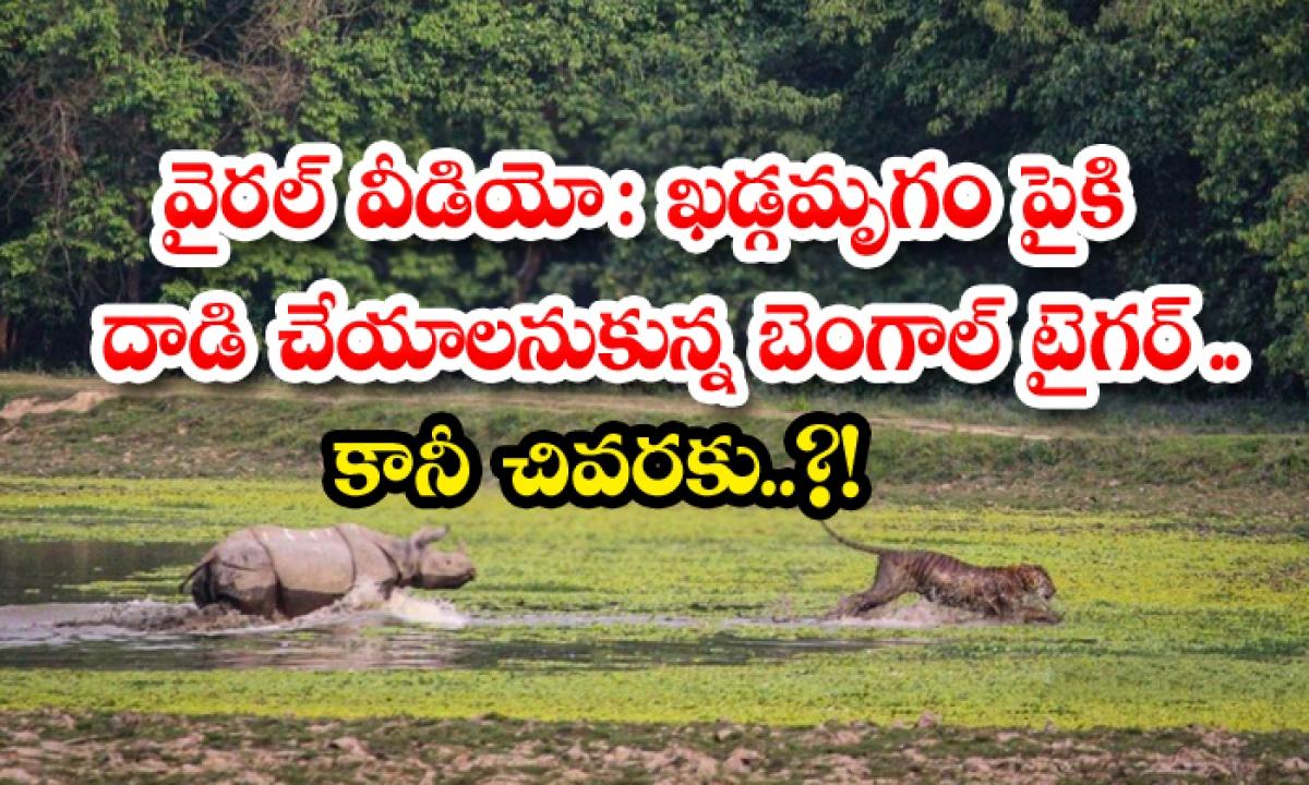 Viral Video Bengal Tiger Wants To Attack Rhinoceros But In The End-వైరల్ వీడియో: ఖడ్గమృగం పైకి దాడి చేయాలనుకున్న బెంగాల్ టైగర్.. కానీ చివరకు..-General-Telugu-Telugu Tollywood Photo Image-TeluguStop.com