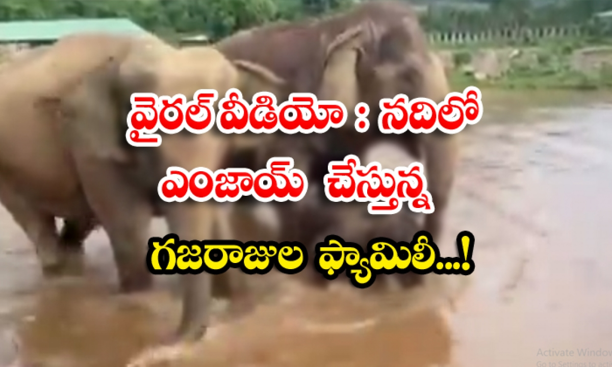 Viral Video Gajraj Family Enjoying In The River-వైరల్ వీడియో: నదిలో ఎంజాయ్ చేస్తున్న గజరాజుల ఫ్యామిలీ..-General-Telugu-Telugu Tollywood Photo Image-TeluguStop.com