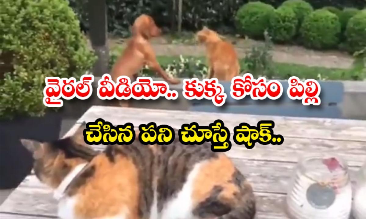 Viral Video Shock To See The Work Done By The Cat For The Dog-వైరల్ వీడియో.. కుక్క కోసం పిల్లి చేసిన పని చూస్తే షాక్..-General-Telugu-Telugu Tollywood Photo Image-TeluguStop.com