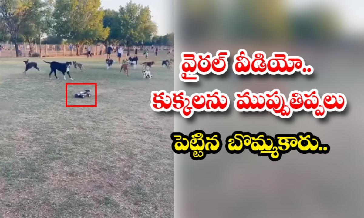 Viral Video Toy Maker Threatening Dogs-వైరల్ వీడియో.. కుక్కలను ముప్పుతిప్పలు పెట్టిన బొమ్మకారు..-General-Telugu-Telugu Tollywood Photo Image-TeluguStop.com