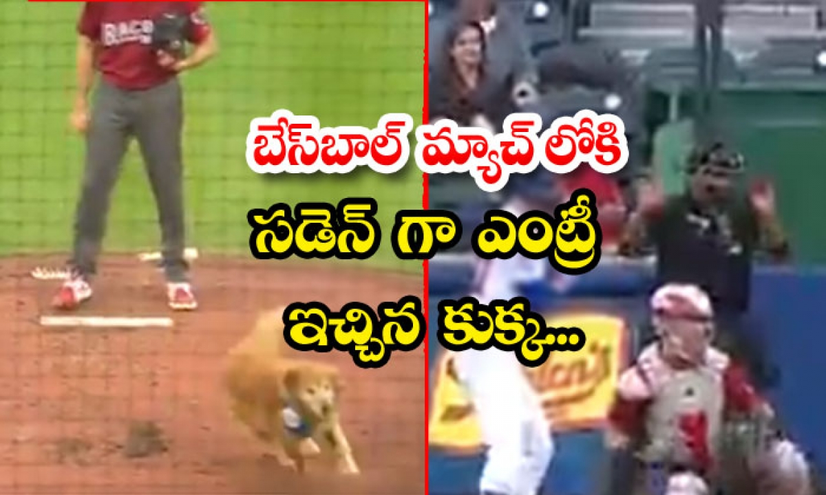 The Dog Who Gave A Sudden Entry Into A Baseball Match-వైరల్.. బేస్బాల్ మ్యాచ్లోకి సడెన్ ఎంట్రీ ఇచ్చిన కుక్క..-General-Telugu-Telugu Tollywood Photo Image-TeluguStop.com