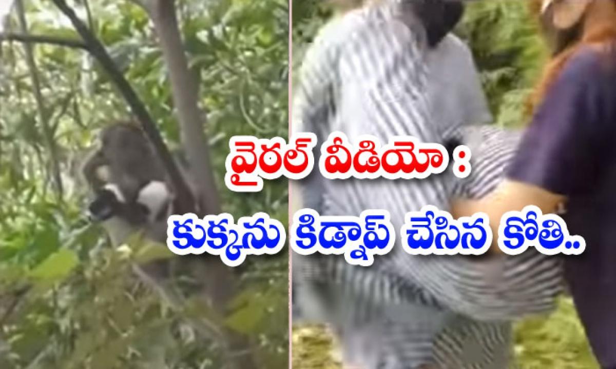 The Monkey Who Kidnapped The Dog-వైరల్ వీడియోః కుక్కను కిడ్నాప్ చేసిన కోతి..-General-Telugu-Telugu Tollywood Photo Image-TeluguStop.com