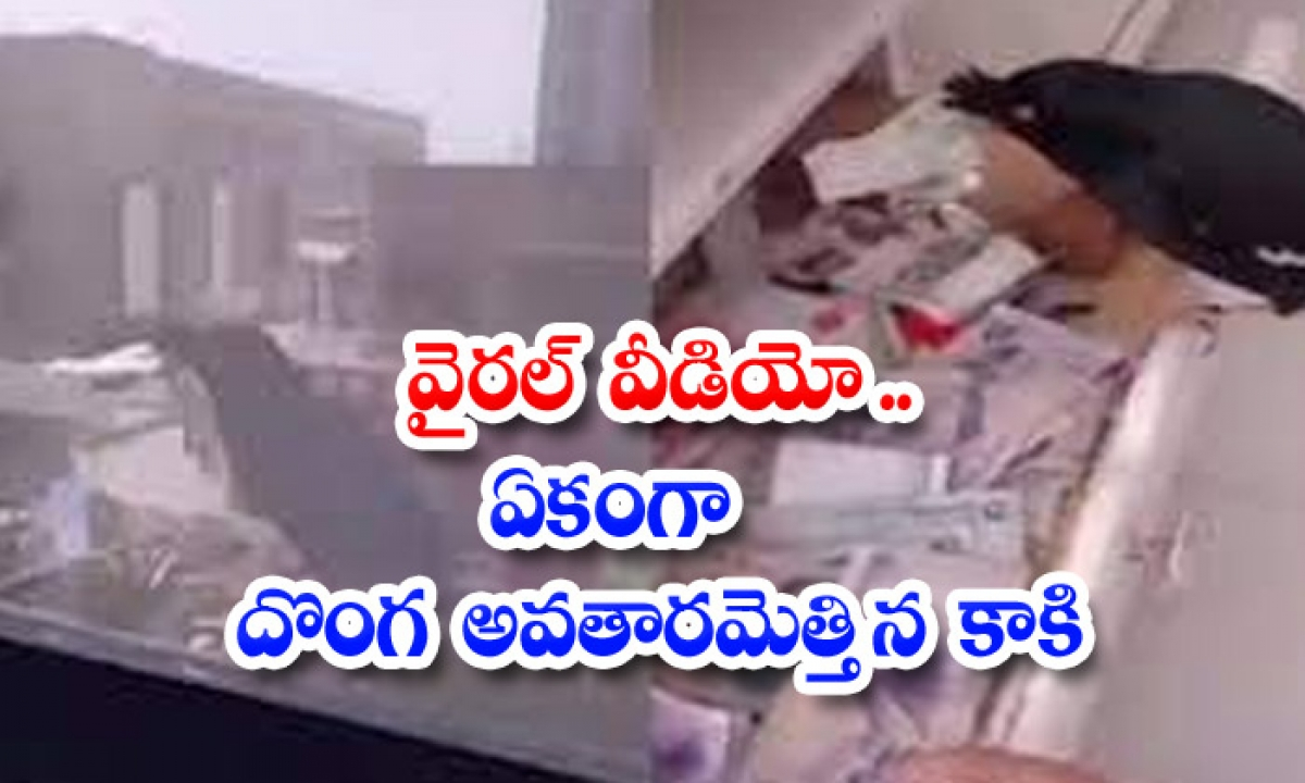 Viral Video A Crow Incarnated As A Thief-TeluguStop.com