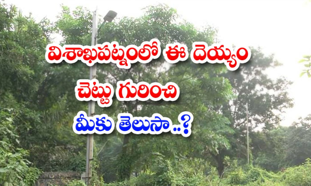 Do You Know About This Ghost Tree In Visakhapatnam-విశాఖపట్నంలో ఈ దెయ్యం చెట్టు గురించి మీకు తెలుసా..-General-Telugu-Telugu Tollywood Photo Image-TeluguStop.com