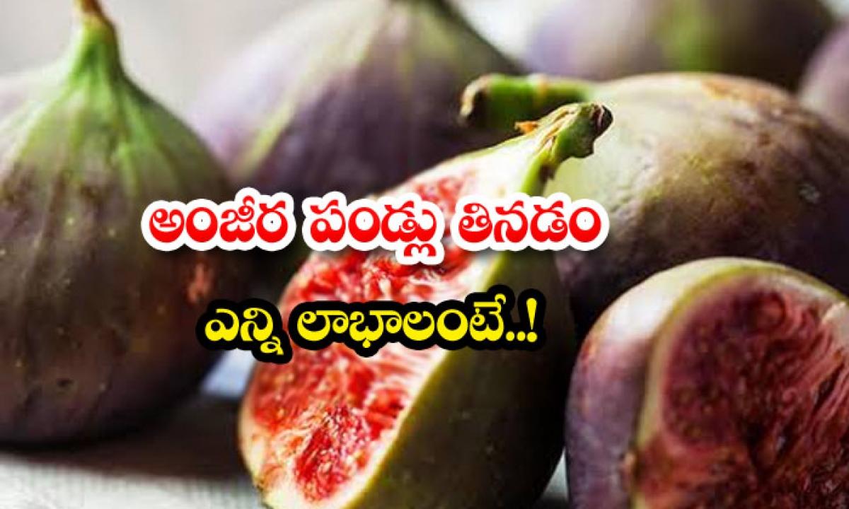 Ankita Fruit Benefits Health Care-అంజీర పండ్లు తినడం ద్వారా ఎన్ని లాభాలంటే..-General-Telugu-Telugu Tollywood Photo Image-TeluguStop.com